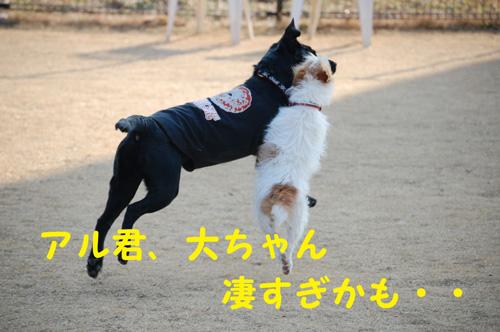 DSC_01950010.jpg