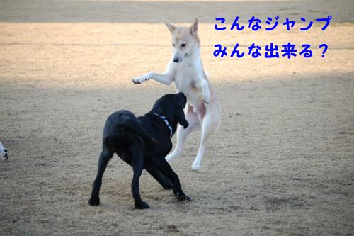 DSC_04630012.jpg