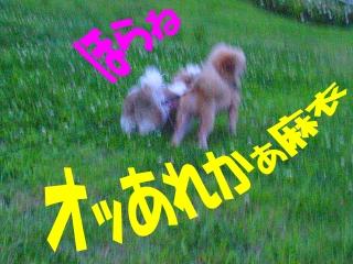 2009070504.jpg