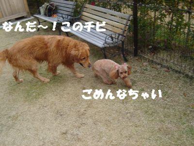 d080108pppp.jpg