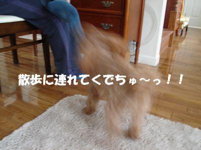 d080320pppp.jpg