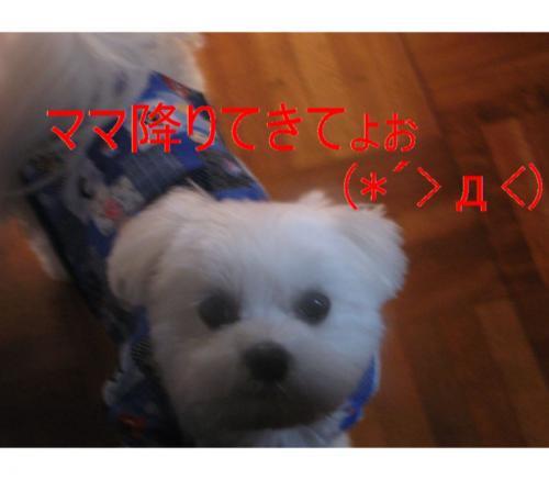 縺オ縺・◆繧灘刈蟾・・論convert_20090121201927