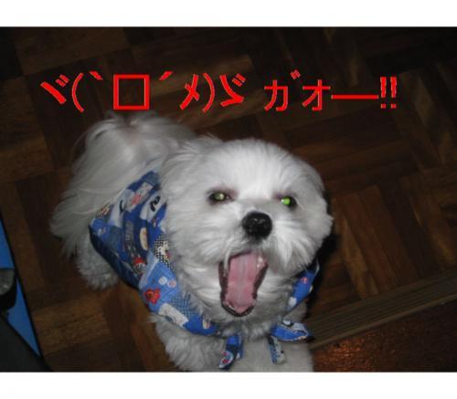 縺オ縺・◆繧灘刈蟾・_convert_20090121202211