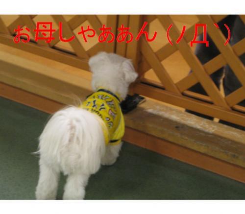 縺オ縺・◆繧灘刈蟾・・托シ狙convert_20090125212958