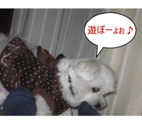 縺オ縺・◆繧点convert_20090307165858