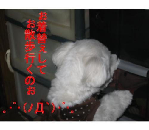 IMG_2215_convert_20090225215822_convert_20090225224746.jpg