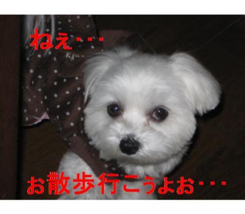 IMG_2237_convert_20090225220052_convert_20090225224823.jpg