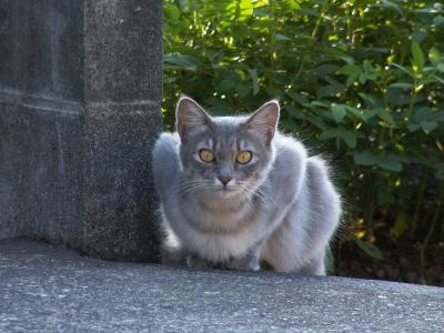 猫屋敷メンバーNO3