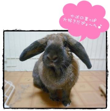 2009-04144.jpg