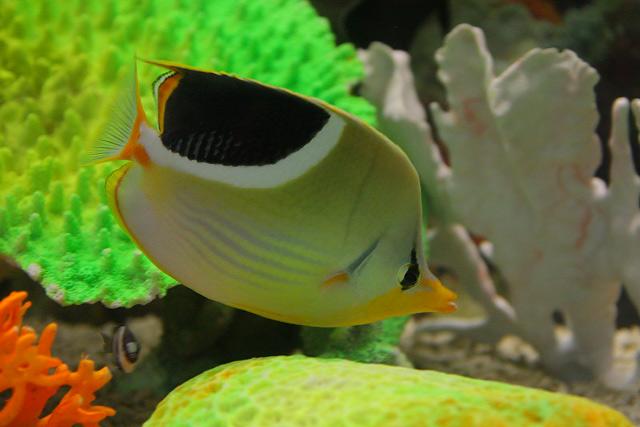 ニューカレドニアと南の島の水族館