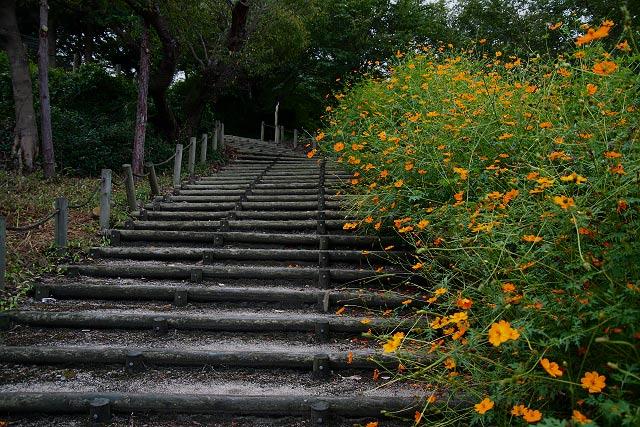 コスモス ポタ~伯耆古代の丘公園