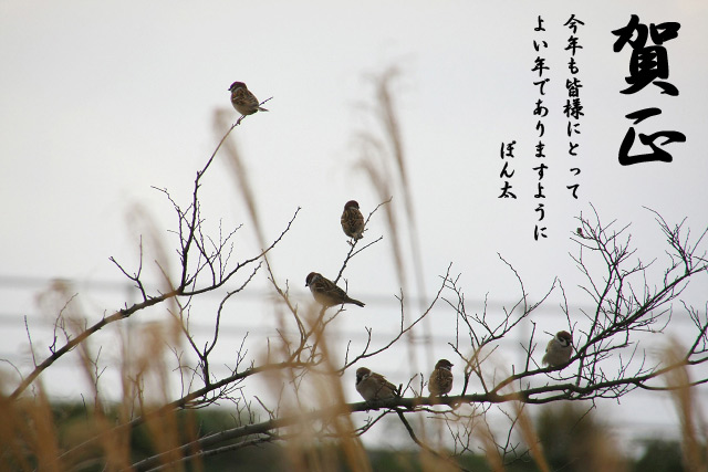 IMG_8209.jpg