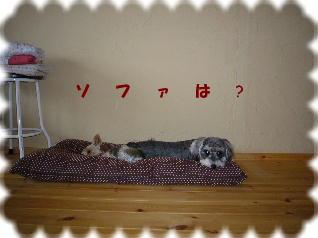 2008_0918アルバム0339