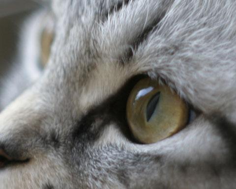 その目に映るのは。