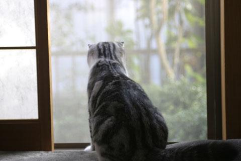 外、見てる。