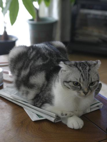 猫のおきまり。