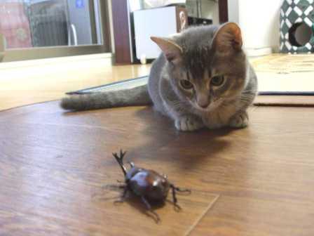 こなんとカブト虫