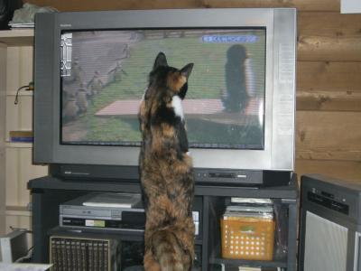 テレビはお好き??-2