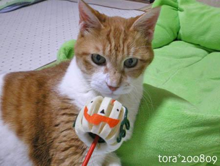 tora08-09-104s.jpg
