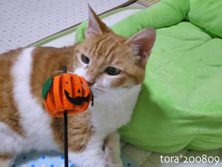 tora08-09-107s.jpg