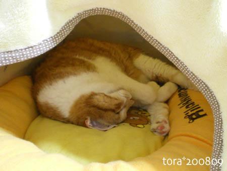 tora08-09-136s.jpg
