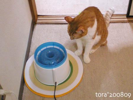 tora08-09-144s.jpg