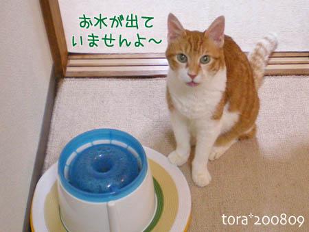 tora08-09-146s.jpg