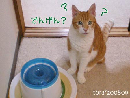 tora08-09-147s.jpg
