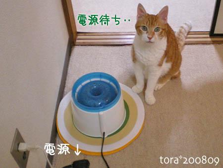 tora08-09-148s.jpg