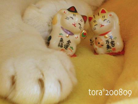tora08-09-187s.jpg
