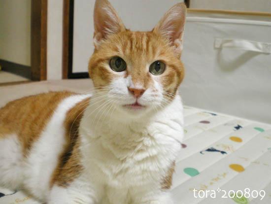 tora08-09-48.jpg