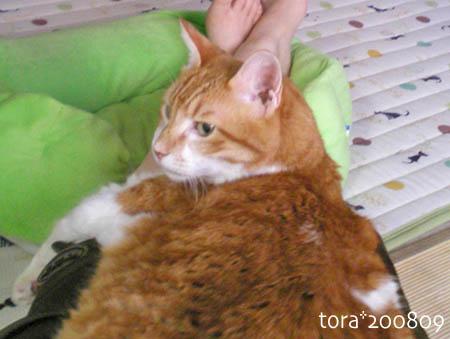 tora08-09-55s.jpg
