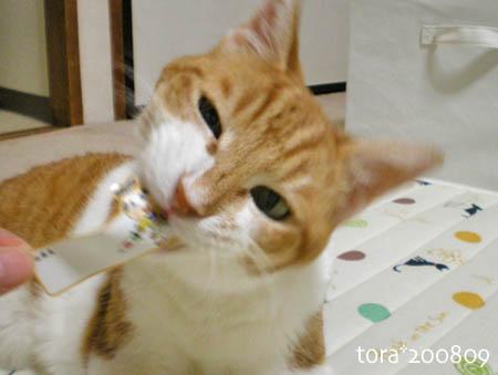 tora08-09-62s.jpg