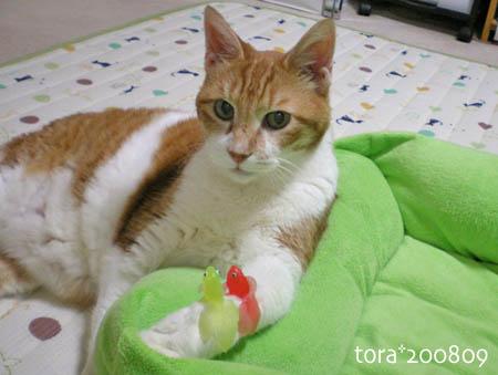tora08-09-74s.jpg