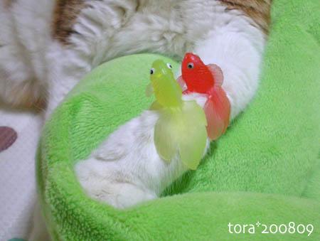 tora08-09-79.jpg