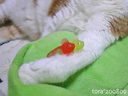 tora08-09-88.jpg