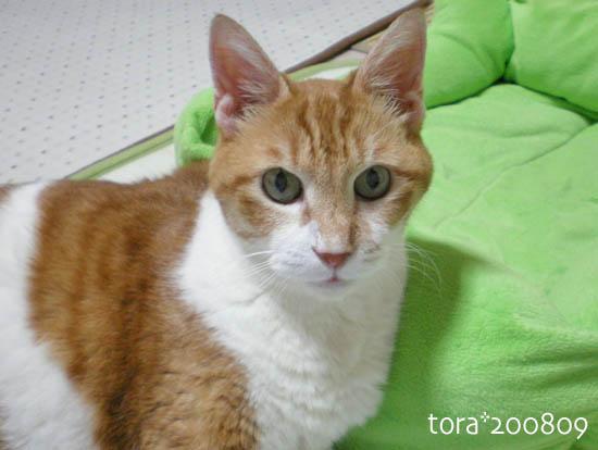 tora08-09-98.jpg