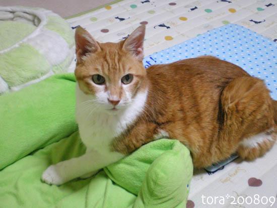 tora08-09-99.jpg