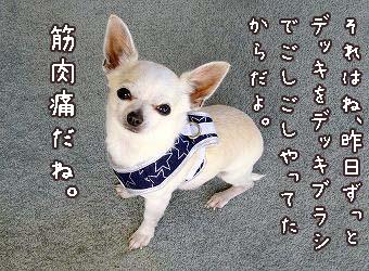 s-dogskip4 copy