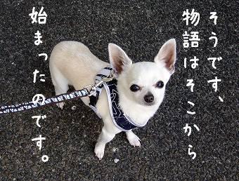 s-dogskip6.jpg