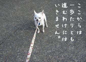 s-inusei3.jpg
