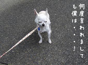 s-inusei6.jpg