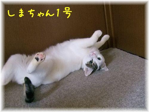 2012_1_9しまちゃん1号