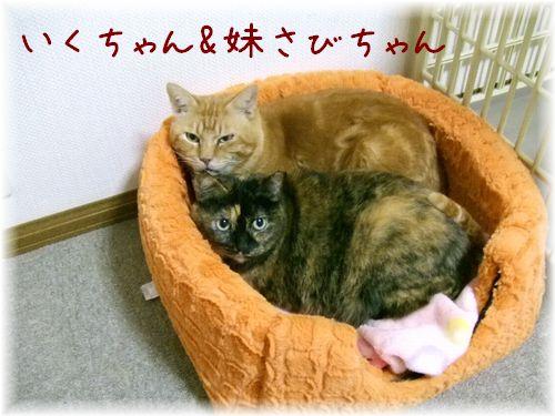 2012_1_9いくさび