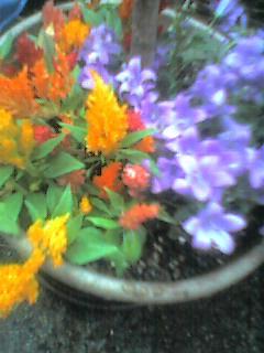 060511_garden1.jpg