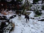 08.02.雪の庭でJS