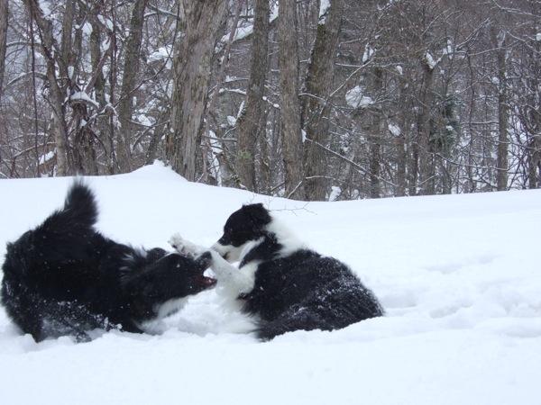 08.0305平湯で豪雪遊び2
