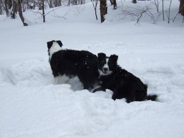 08.0305平湯で豪雪遊び3JPG