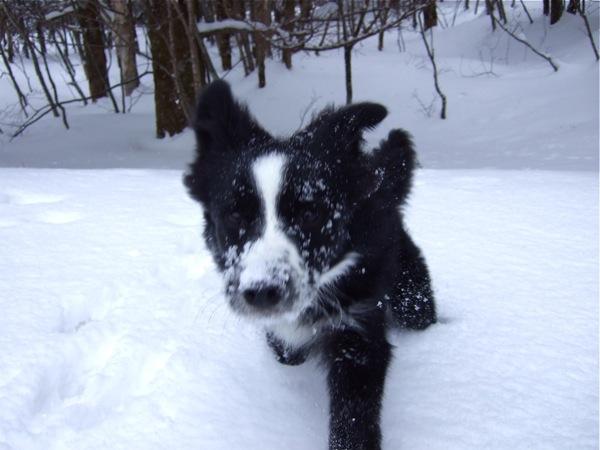 08.0305平湯で豪雪遊び4JPG