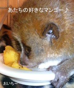 マンゴーおいちぃ